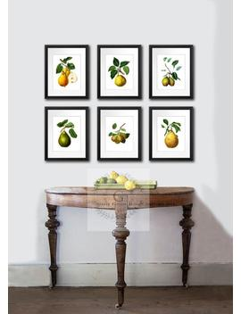 Farmhouse Decor, Pear Art Prints Set Of 6 Unframed Kitchen Wall Art, Dining Room Decor, Gift For Her, Housewarming Gift by Etsy