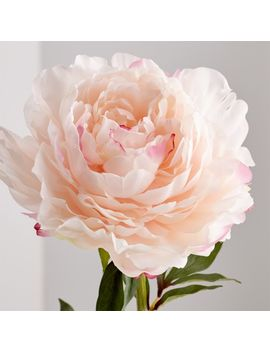 Artificial Pink Peony Flower Stem by Crate&Barrel