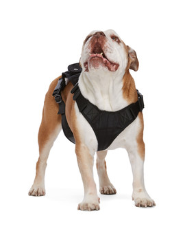 Ssense Exclusive Black Large Dog Harness by Marine Serre