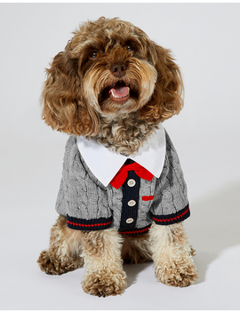 Preppy Dog Jumper by Accessorize
