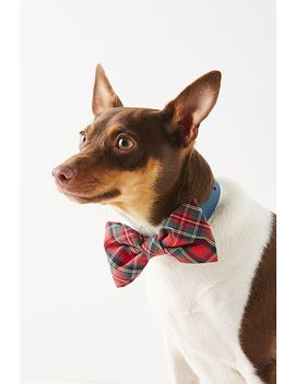 The Foggy Dog Bow Tie by The Foggy Dog