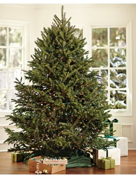 Fresh Blue Ridge Mountain Christmas Tree 6'   7', Dec. 16   Dec. 20 by Williams   Sonoma