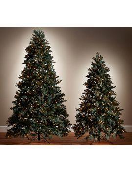 Lit Faux Blue Spruce Tree, 7' by Pottery Barn