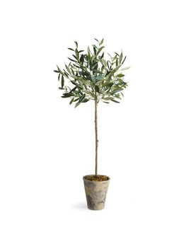 Olive Tree In Planter by Alcott Hill
