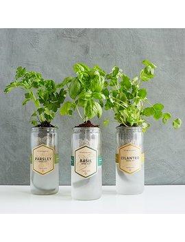Kitchen Essentials Herb Planter by Uncommon Goods