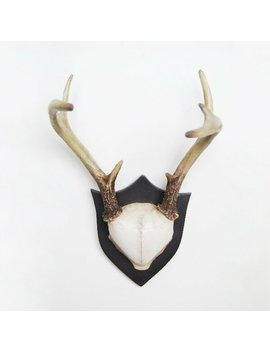 Deer Antlers Wall Décor by Alpen Home