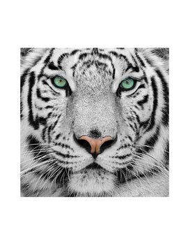 Tiger Photograph Glass In Black/White/Pink by Ebern Designs