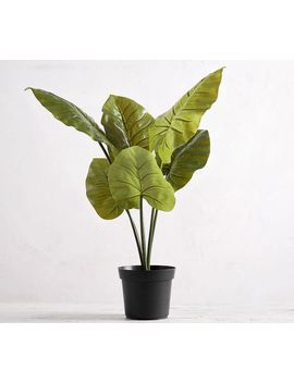 Faux Potted Philodendron Houseplant, Large by Pottery Barn