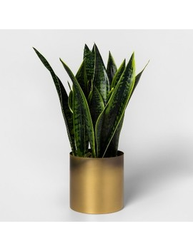Faux Sansevieria Plant In Gold Pot   Project 62™ by Shop This Collection
