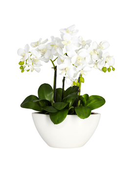 Nearly Natural Phalaenopsis Silk Flower Arrangement                      Nearly Natural Phalaenopsis Silk Flower Arrangement by Nearly Natural