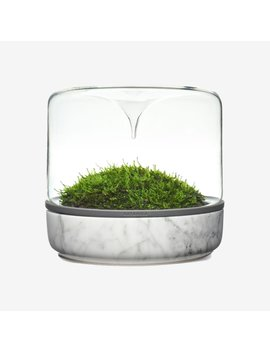 Medium Sanctuary Habitat, Carrara Marble by Modern Sprout