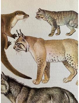 1970s Original Vintage Nature Illustration   Mammals   Otter, Wildcat, Wolf, Fox by Etsy