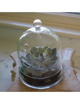 Glass Terrarium by Union Rustic