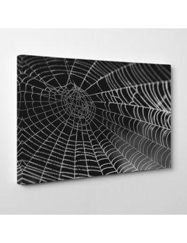 Spider Cobweb Photographic Print On Canvas by Big Box Art