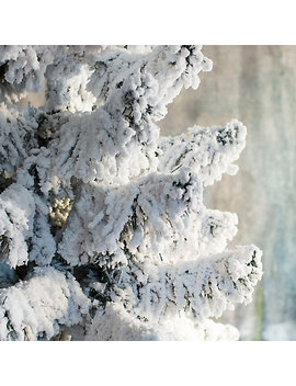 Snowy Faux Colorado Pine by Terrain