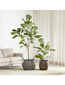 Faux Fiddle Leaf Fig Trees by Crate&Barrel