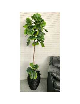 Fiddle Leaf Fig Tree In A Basket Silk Plant by Pier1 Imports