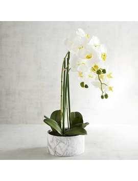 Faux Orchid Floral Arrangement In Marble Pot by Pier1 Imports