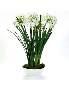 Potted Agapanthus by Z Gallerie