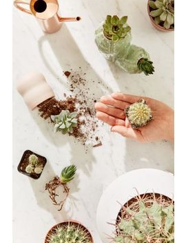 """2"""" Live Assorted Hardy Plant   Set Of 20 by Urban Outfitters"""