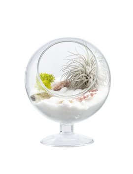 Mkono Air Plant Terrarium 5 Inch Succulent Glass Planter Container Plant Display Vase With Pedestal by Mkono