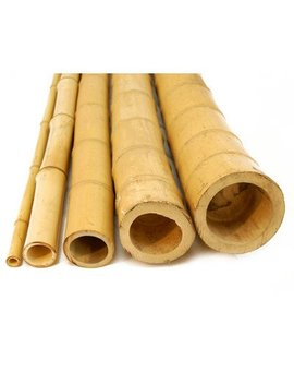 "Bamboo Poles Size: 0.5""D X 4' H; 25 Piece Bundle by Backyard X Scapes"