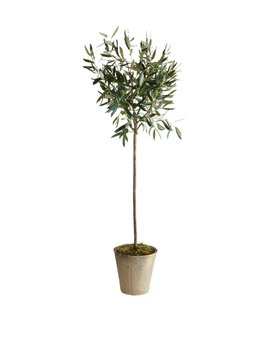 Napa Home & Garden Olive Tree In Pot, 46 Inch by Napa Home & Garden