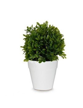 "Artificial Boxwood Plant In Ceramic Pot Green 8""   Lloyd & Hannah by Lloyd & Hannah"