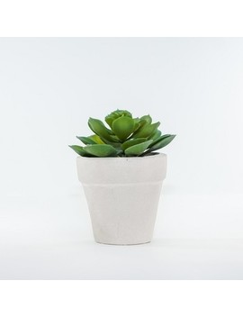 "Artificial Succulent And Foliage In Ceramic Pot Green 6""   Lloyd & Hannah by Lloyd & Hannah"