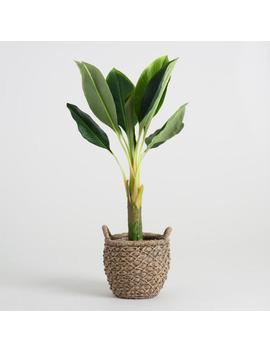 Faux Single Stalk Banana Tree by World Market