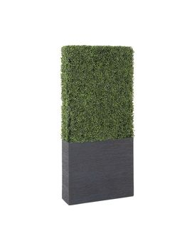 Exclusive And Utmost Beautiful Boxwood Hedge by Generic
