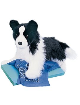 Chase Border Collie by Douglas