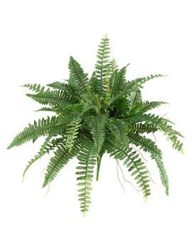 """Boston Fern 2pk (40"""")   Nearly Natural by Nearly Natural"""