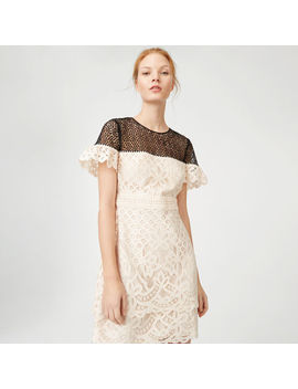 Wollstan Lace Dress by Club Monaco