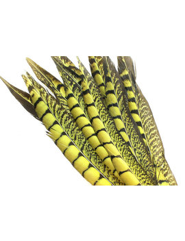 10 12 Inch Yellow Lady Amherst Feathers (5) Yellow Pheasant Feathers. Yellow Bird Feathers. Yellow Feathers. Yellow Colored Feathers. by Etsy