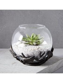 Patch Nyc Terrarium by West Elm