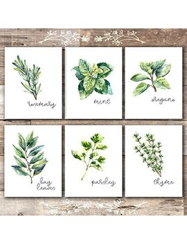 Kitchen Herbs Art Prints   Botanical Prints   (Set Of 6)   Unframed   8x10s by Amazon