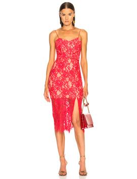 Rubie Lace Bra Dress by Nicholas